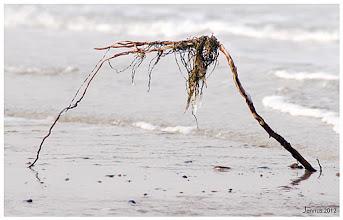 Photo: Das Meer: Strandfunde, Holz, Eis, Winter und Wellen