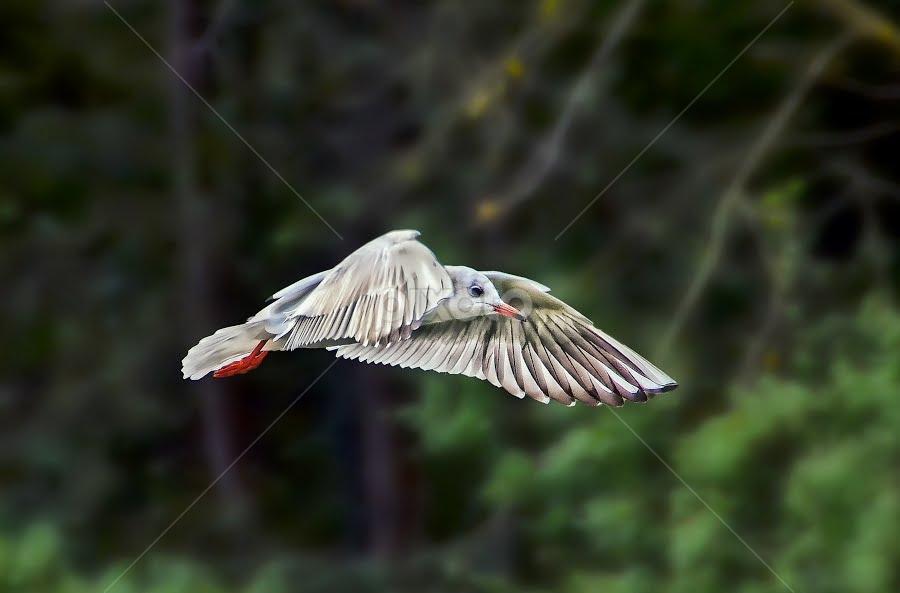 looking for fish by Ghislain Vancampenhoudt - Animals Birds