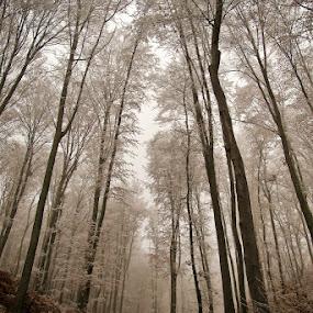 Sleepy Forest by Jadranka Bužimkić - Landscapes Forests