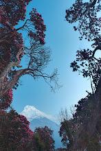 Photo: Annapurna