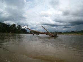 Photo: Amazon Delta