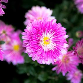 Color Burst by Richard States - Flowers Flower Gardens ( color, vivid, beauty, flowers, garden,  )
