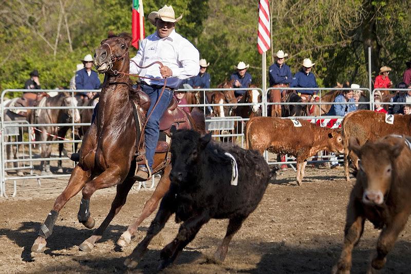Il team perfetto, cavallo e cavaliere di FrancescoPaolo