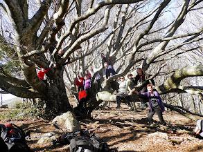 Photo: superbe après-midi, magnifique hêtre, joyeuse troupe ... excellente rando !