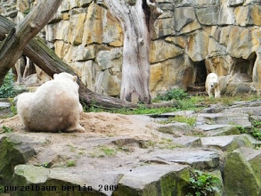 Photo: Knut beobachtet Gianna von seinem Sandhaufen aus ;-)