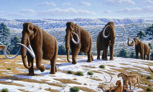 In the News: Mammoth for Dinner?