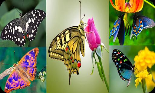 Butterfly Puzzle Jigsaw (Rompecabezas de mariposa) android2mod screenshots 15