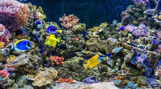 Sumérgete en las profundidades del océano con Aquarium Costa de Almería