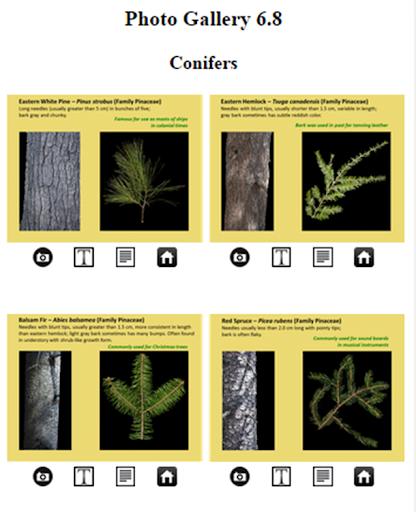 FP Tree ID App