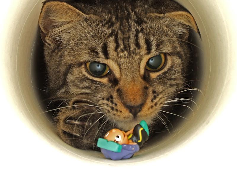 Il gatto nel tubo di fast.dp