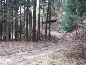下で林道に合流(左へ)