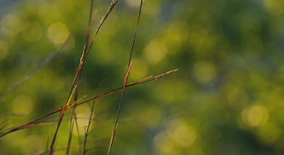 Photo: Oh, the lovely grasses
