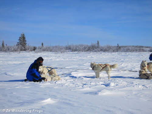 Arctic Canada Inuvik Winter Camping Tundra Dog Sledding // Bruno cuddling with his lead Husky dogs