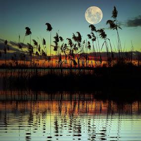 Evening on the lake by Dunja Milosic Odobasic - Digital Art Places (  )