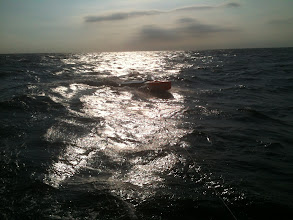 Photo: thursday morning...borcken mast