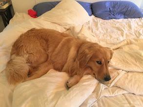 Photo: Mindy the Crippler likes to sleep in on Sundays