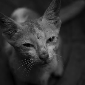 The Kitty by Anupam Pal - Animals - Cats Kittens