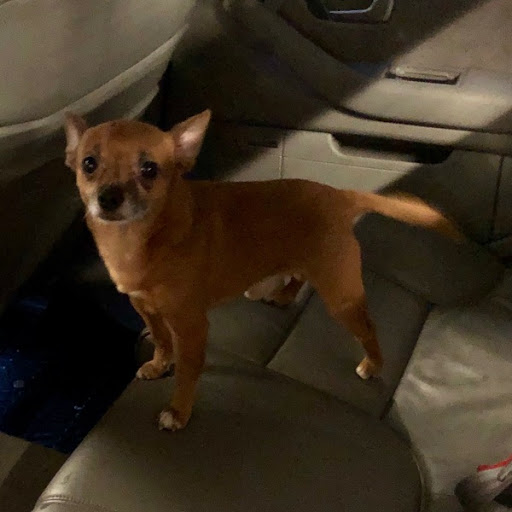 Do you know my owner?, FOUND Sep 14, 2019