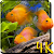 Aquarium 4K Live Wallpaper file APK Free for PC, smart TV Download