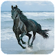 Horse Wallpaper HD Download for PC Windows 10/8/7