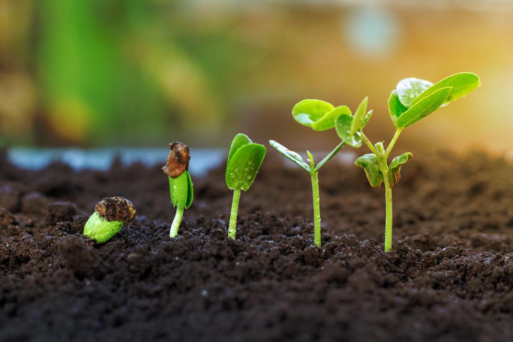 plantas crescendo