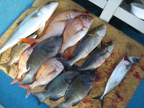 """Photo: 釣果です! まずは""""カワサキさん""""の釣果その1. ヒラスにクロ、イサキ、真鯛・・・"""