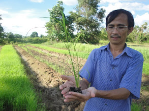 Photo: Dr. Y.S. Koma holding a 17-day-old seedling to be planted at large-scale SRI planting at Battambang [photo courtesy of Y.S. Koma]
