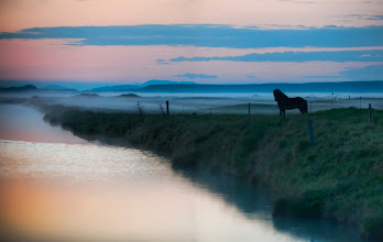 "Photo: The Silent Horse in the Fog   Every night around 2 AM in Iceland was like a dream. I'm always enjoyed staying up late... As Sarah McLachlan says, ""Night is my companion."" Sometimes, after midnight is when things really start to flow, so my two-week sleep reversal of staying up all night to drive around Iceland was a trippy experience. The weather was always strange. Sometimes sunny, sometimes cloudy -- but always with a tinge of the surreal.  - from the blog www.stuckincustoms.com"