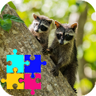 Funny Raccoon Jigsaw Puzzle Game
