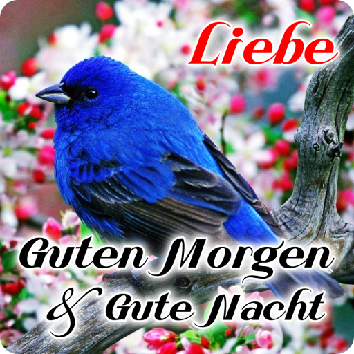 تحميل Guten Morgen Nachmittag Gute Nacht Liebe 7642