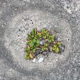 Against the Odds by Theo Collett - Nature Up Close Rock & Stone ( nature, contrasts, plants, survival, rocks )