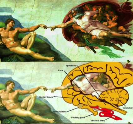 creation-of-adam-brain.jpg