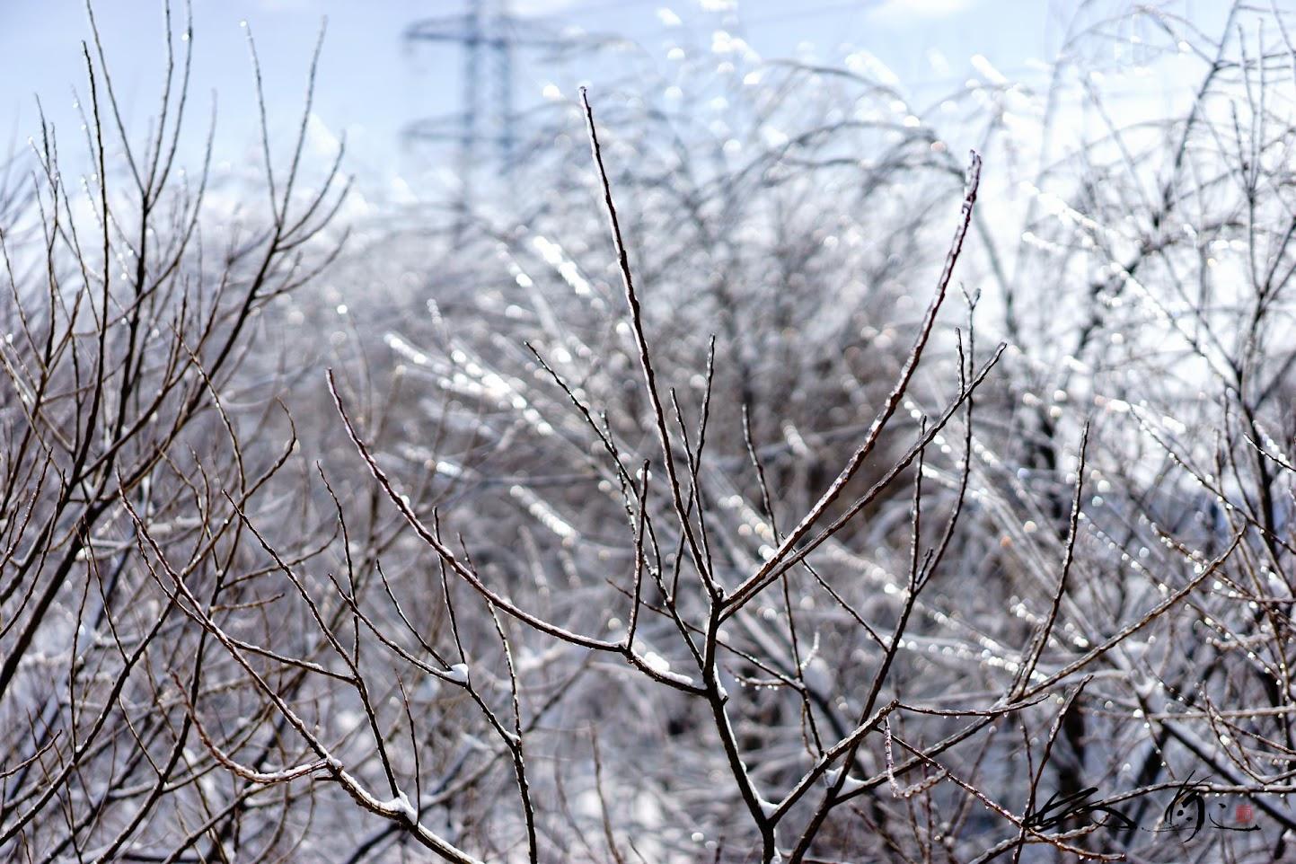 枝に凍結付着した粗氷