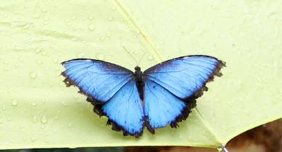 Photo: Schmetterlinge mit Schirm-Fetisch - sachen gibts...