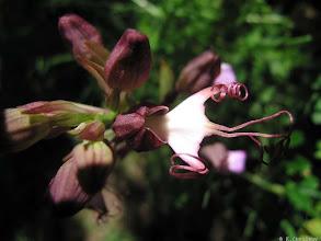 Photo: Как называется этот цветок. Это вид орхидеи?