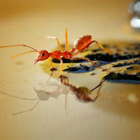 Mirror Mirro on The Water.. by Esron Panjaitan - Animals Insects & Spiders ( pwcinsectsandspiders, macro, ants )