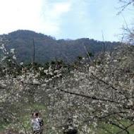 柳家梅園農場