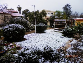 Photo: Devorah's garden this morning צילמה דבורה בט
