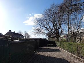 Photo: Es (weg 2016) Beatrixplein, Mijnsheerenland