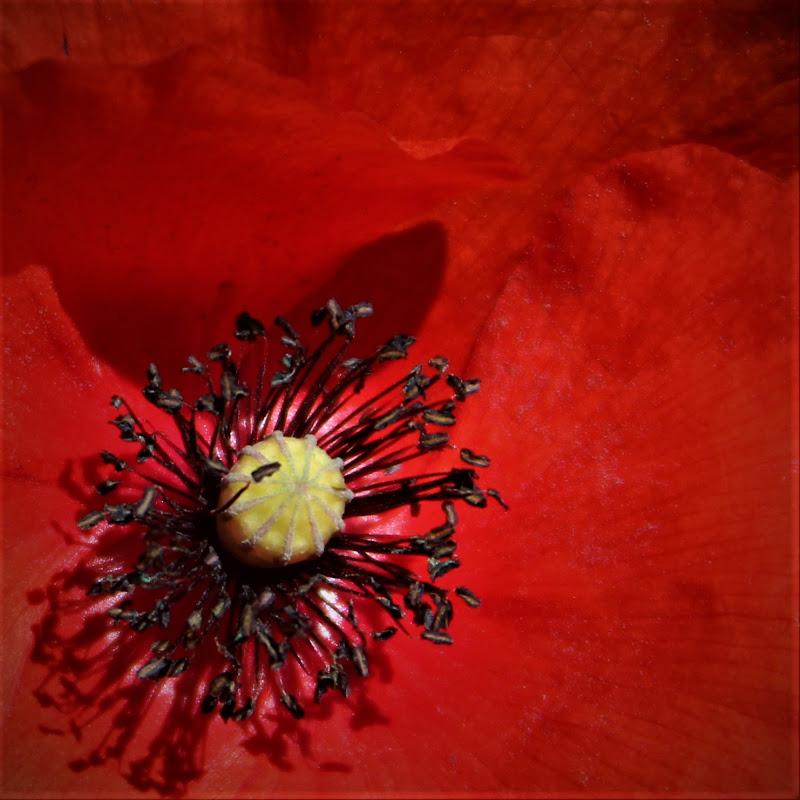 il fiore della consolazione di Gero
