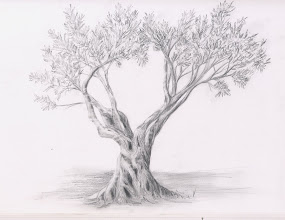 Album Archive  dibujo a lapiz plantas