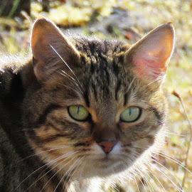cutie by Bjarklind Þór - Animals - Cats Portraits
