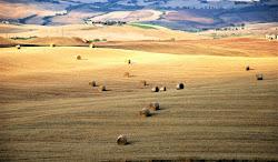 Colori di Giugno in Toscana