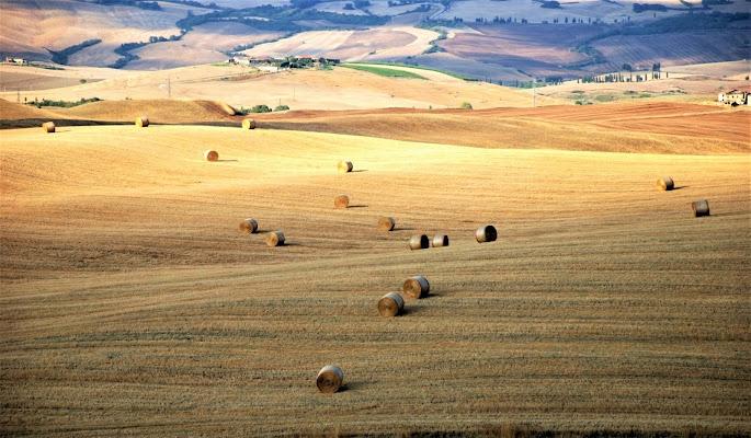 Colori di Giugno in Toscana di MORENO ANTOGNOLI