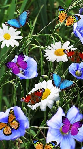 花は壁紙を生きます