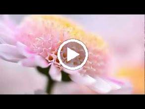 Video: A. Vivaldi  RV 652   Aure, voi più non siete - Cantata for soprano   b.c.   R. Bertini -