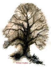 Photo: Tree-95