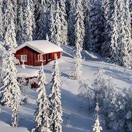 Winter wonderland by Jørgen Schei - Landscapes Forests ( cabin, winter, snow, trees, forest, landscape )