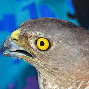 by Nitin Puranik - Animals Birds