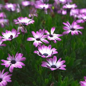 Beautiful Flowers in my garden by Greg Bracco - Flowers Flower Gardens ( canon, greg bracco, hdr flowers, hdr, canon 5d mark iii, flowers, greg bracco photography, hdr photo,  )